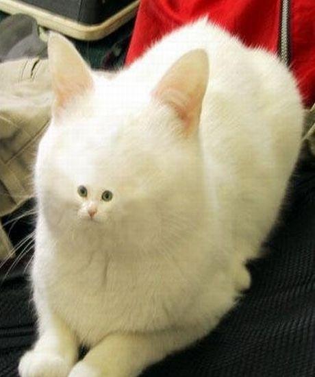 little cat face 1
